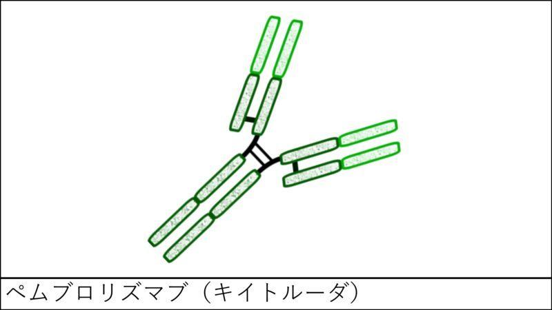 ペムブロリズマブ(キイトルーダ)の特徴