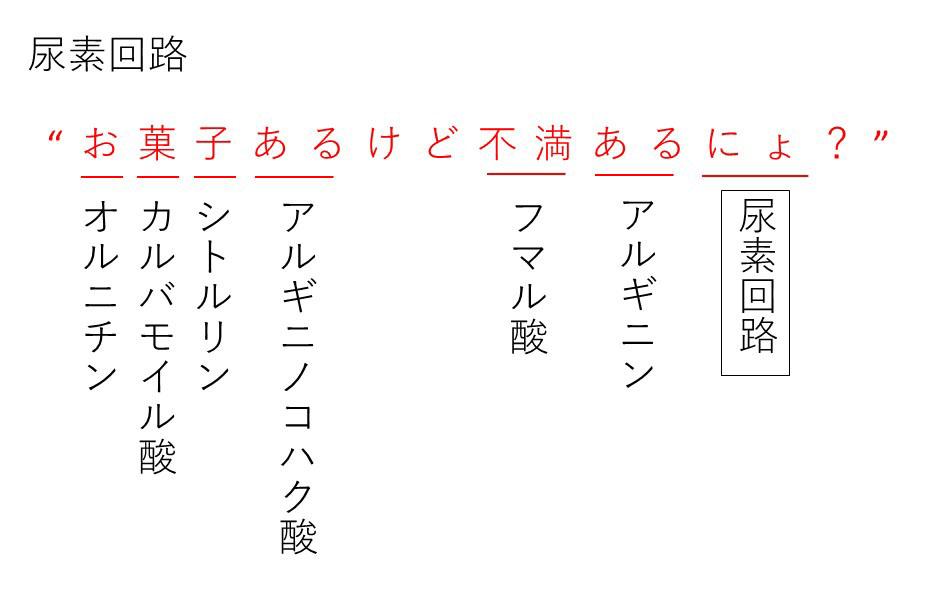 方 尿素 回路 覚え 尿素回路(オルニチンサイクル)のゴロ(覚え方)|薬学ゴロ
